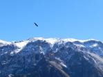 Canón del Colca, Arequipa